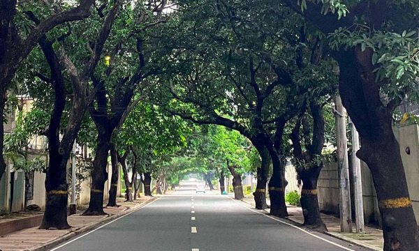 A neighbourhood well-paved street located in New Manila with trees and well-maintained sidewalks on both sides